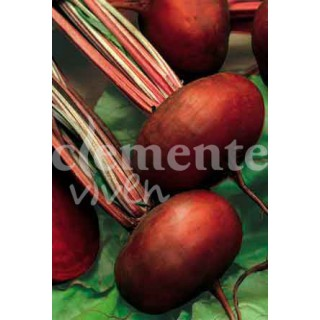 Ligustrum sinensis 8 años
