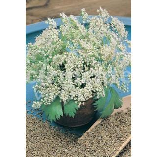 Crisantemo bola M-14