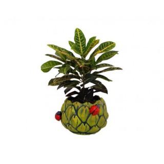 Guía bonsái Zelkova