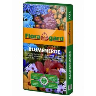 Rosal Adolf Horstmann Grandiflora