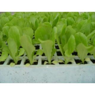 Sustrato mesa cultivo 90 x 60 cm