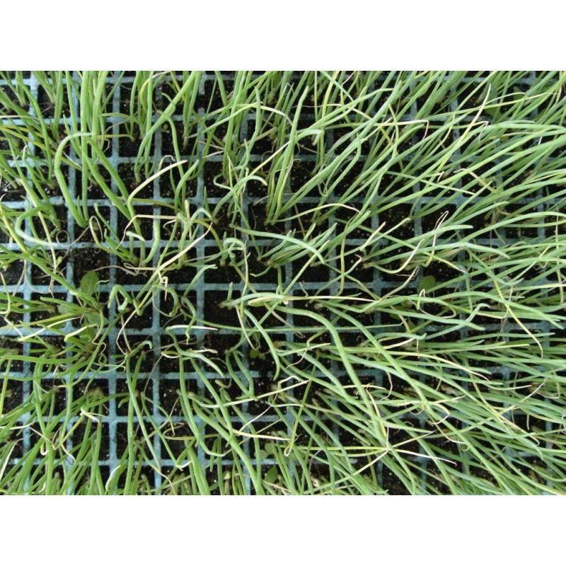 Cicatrizante  Árboles Pastol Profesional