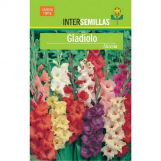 Semillas de Zinnia Flor de Cactus Variada