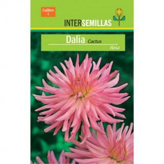 Zelkova Parvifolia  5 Años - Olmo Chino