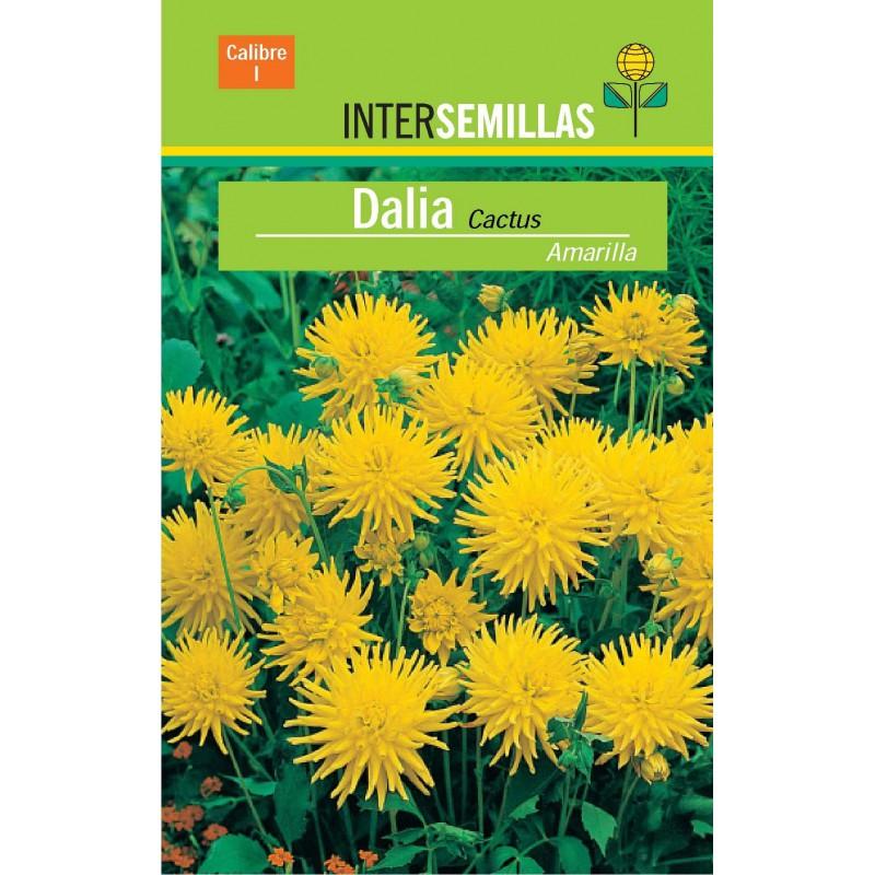 Zelkova Parvifolia  8 Años - Olmo Chino