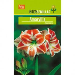 Stimulator - Estimulador Floración