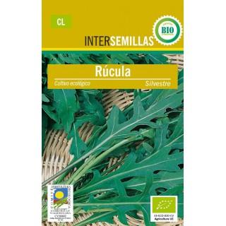 Bulbo Dalia Cactus Violeta