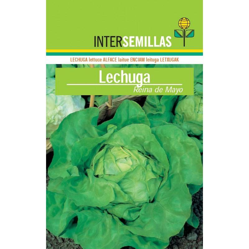 Alcachofa con macetero y planta