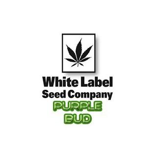 Semillas ECO de Acelga Verde Penca Blanca 2
