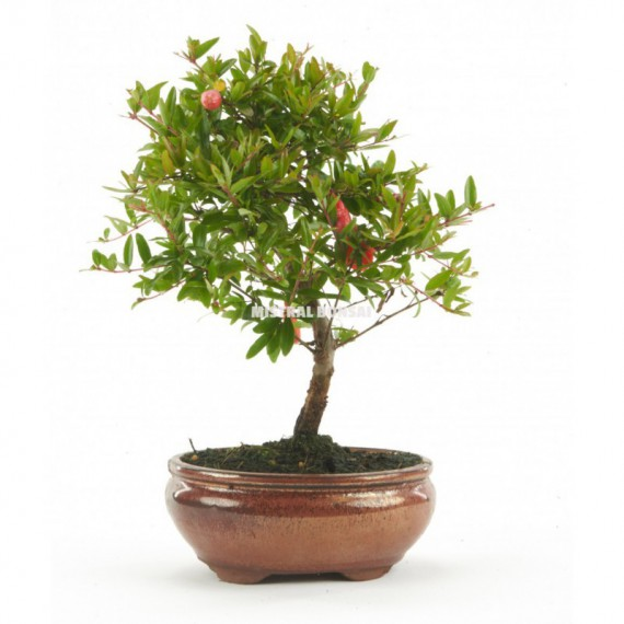Jardinera INIS 60cm