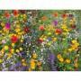 Semillas de Flores Silvestres Mezcla