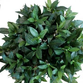 Bastoncitos Fertilizantes con Guano - Plantas de Flor