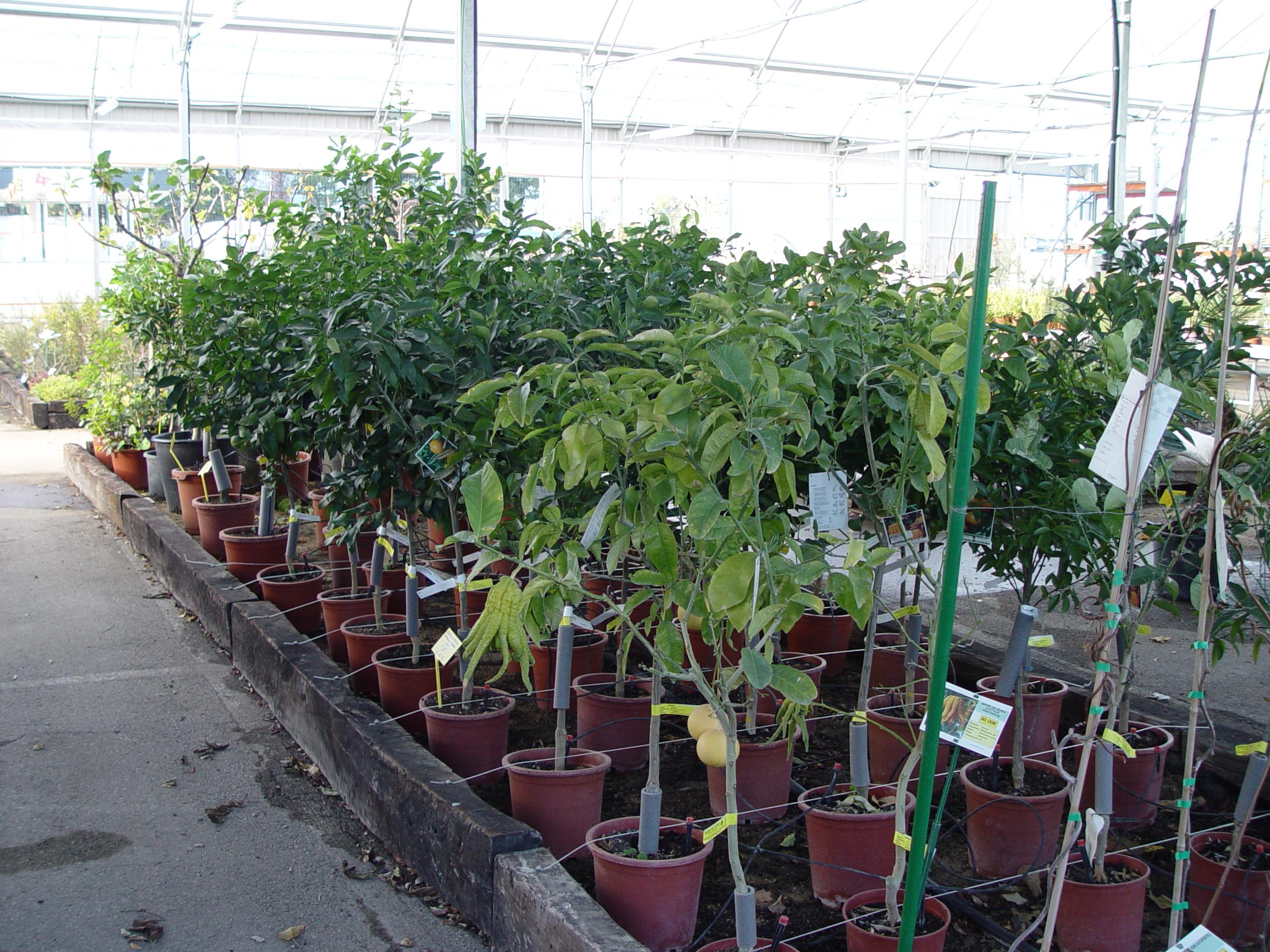 Qu hacer en el huerto en diciembre huerto jard n for Viveros frutales wikipedia