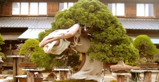 el-arte-bonsai