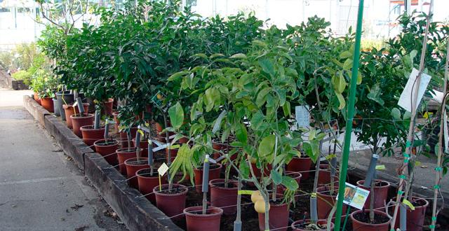 Plantar rboles frutales huerto jard n bons is y - Cuando plantar frutales ...