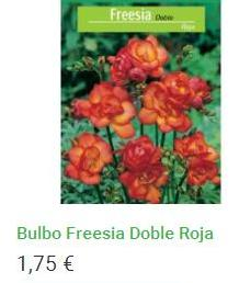 Bulbo Freesia Doble Roja
