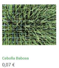 Plantero de cebolla babosa