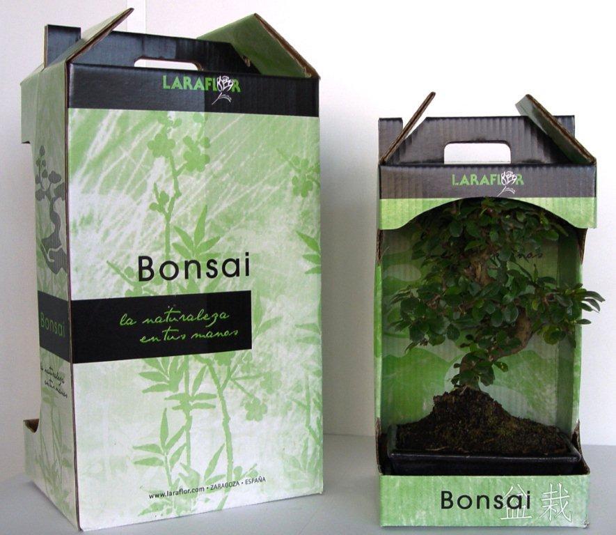 Embalaje bonsáis
