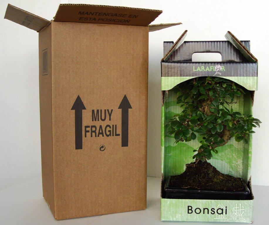 Embalaje y envío de bonsái